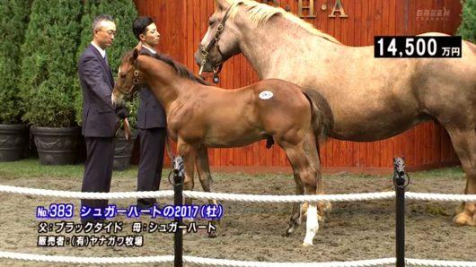 button-only@2x キタサンブラックの種牡馬価値は?価格(種付け料)を血統や成績で予想‼